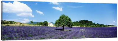 Lavender Field Provence France Canvas Print #PIM3354