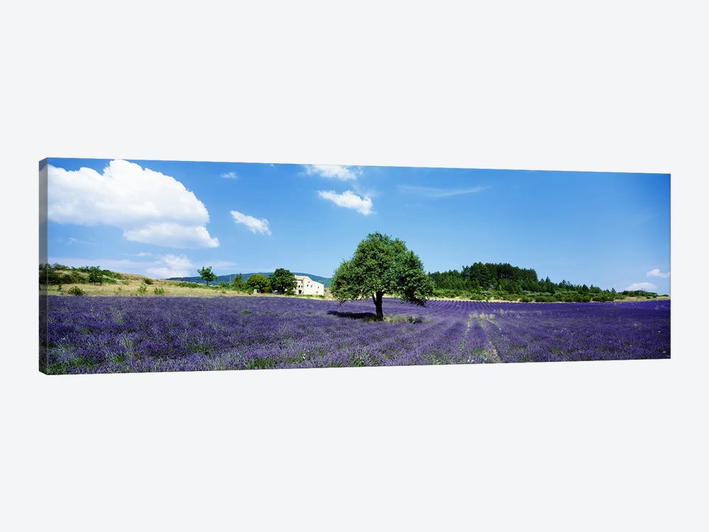 Lavender Field Provence France by Panoramic Images 1-piece Canvas Print