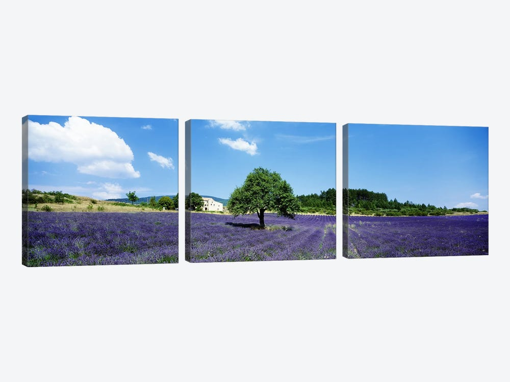 Lavender Field Provence France by Panoramic Images 3-piece Canvas Art Print