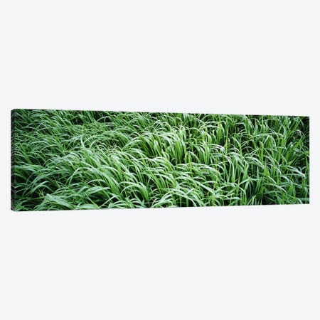 High angle view of grassMontana, USA Canvas Print #PIM3440} by Panoramic Images Canvas Artwork