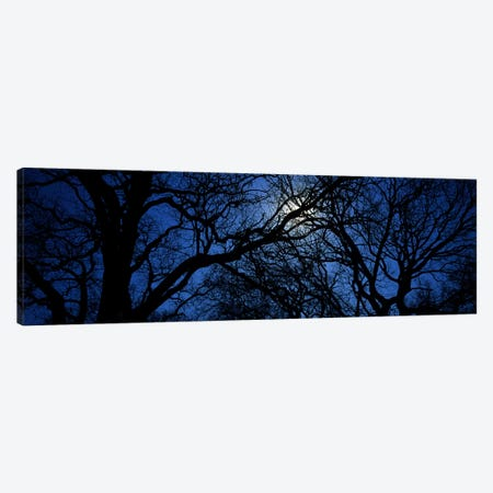 Silhouette of Oak treesTexas, USA Canvas Print #PIM3441} by Panoramic Images Canvas Artwork