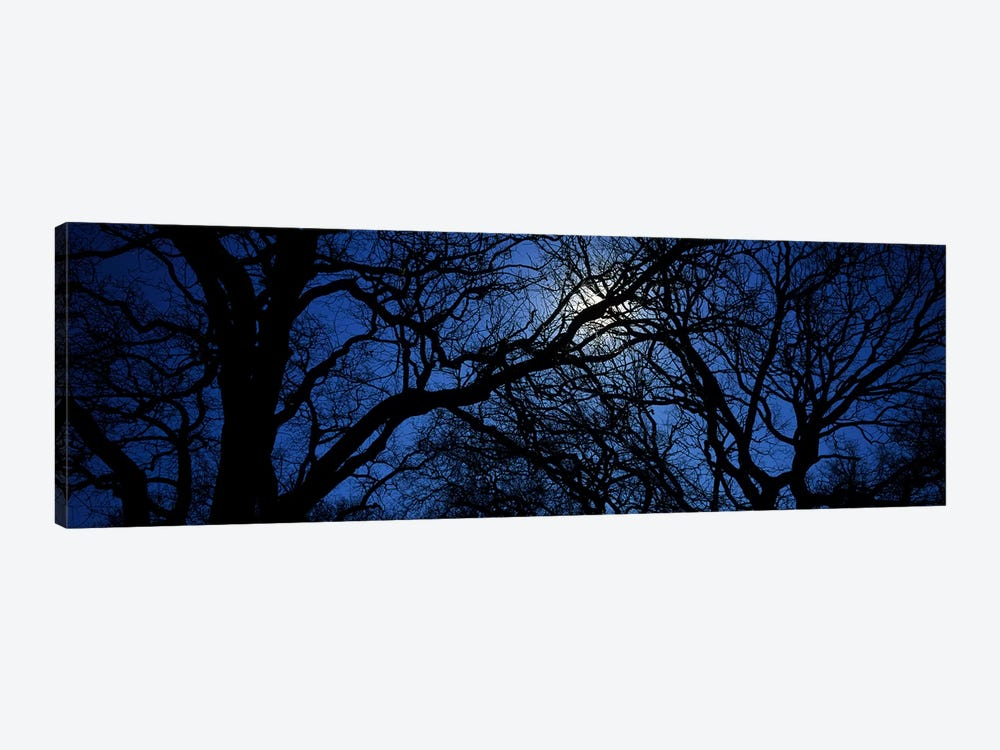 Silhouette of Oak treesTexas, USA by Panoramic Images 1-piece Canvas Wall Art