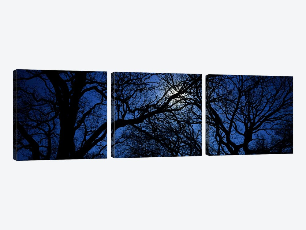 Silhouette of Oak treesTexas, USA 3-piece Canvas Artwork