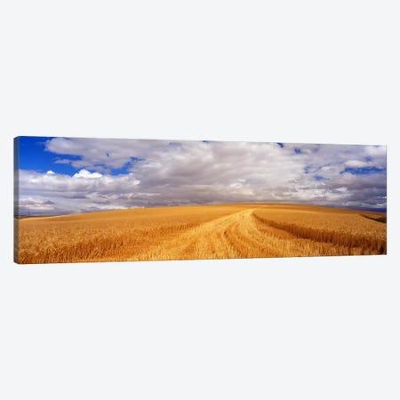 Wheat FieldWashington State, USA Canvas Print #PIM3443} by Panoramic Images Canvas Artwork