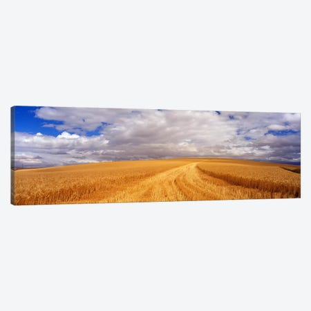 Wheat FieldWashington State, USA Canvas Print #PIM3443} by Panoramic Images Canvas Artwork