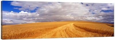 Wheat FieldWashington State, USA Canvas Print #PIM3443