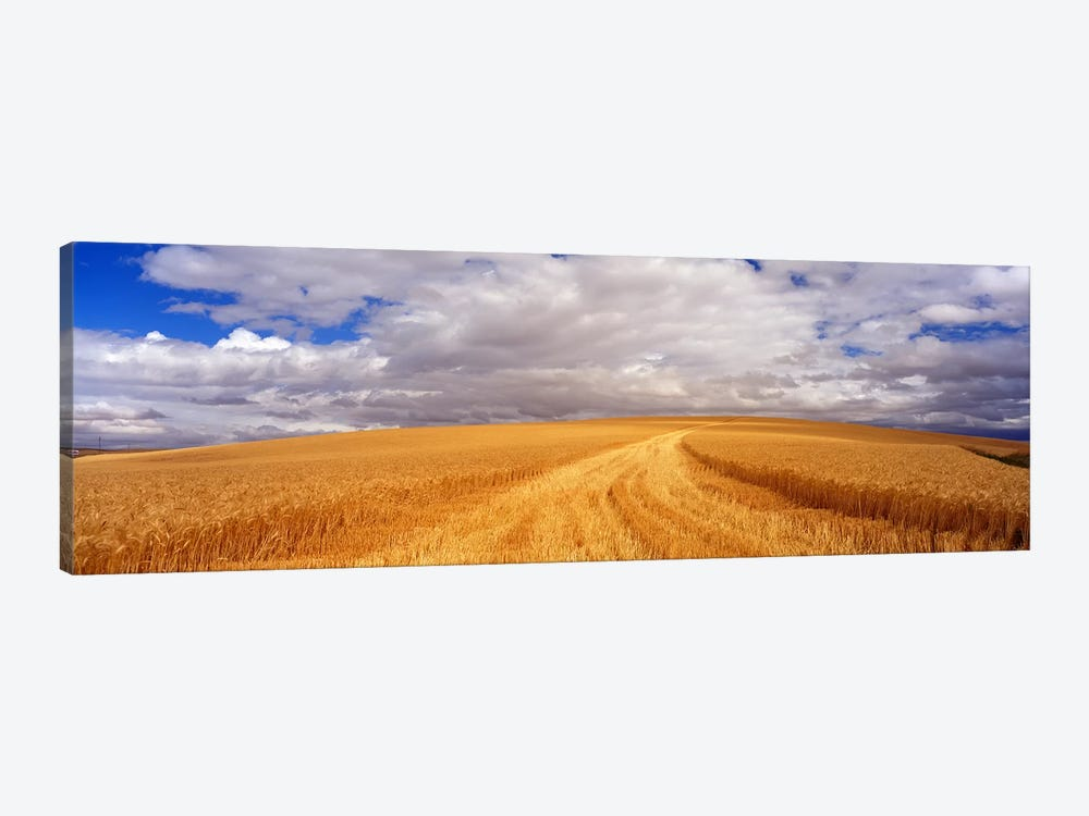Wheat FieldWashington State, USA by Panoramic Images 1-piece Canvas Artwork