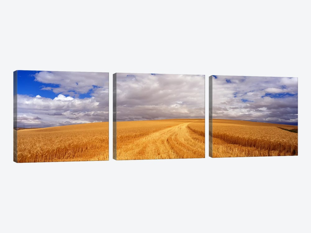 Wheat FieldWashington State, USA by Panoramic Images 3-piece Canvas Artwork