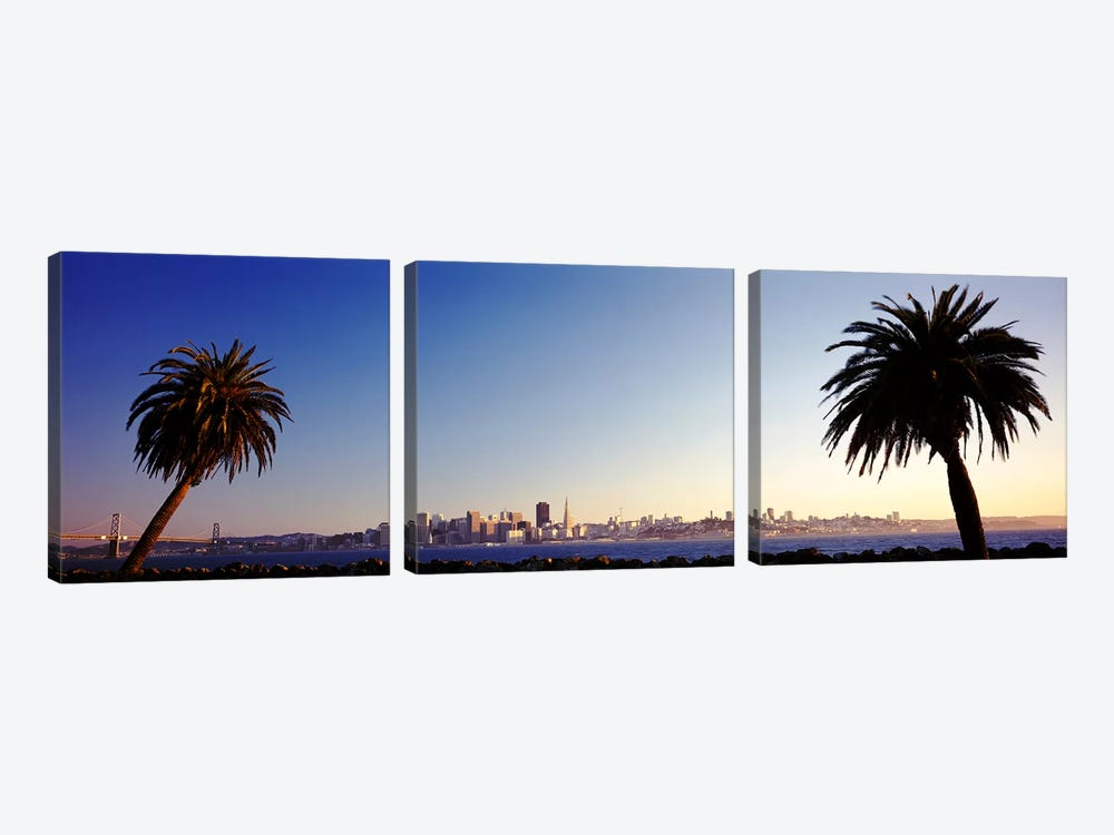 Palm Trees At Dusk, San Francisco, California, USA by Panoramic Images 3-piece Canvas Print