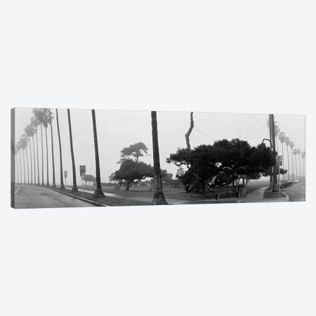 Palm Trees And Fog, San Diego, California Canvas Print #PIM3553} by Panoramic Images Canvas Artwork