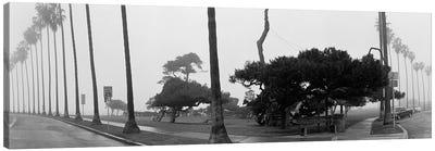 Palm Trees And Fog, San Diego, California Canvas Print #PIM3553