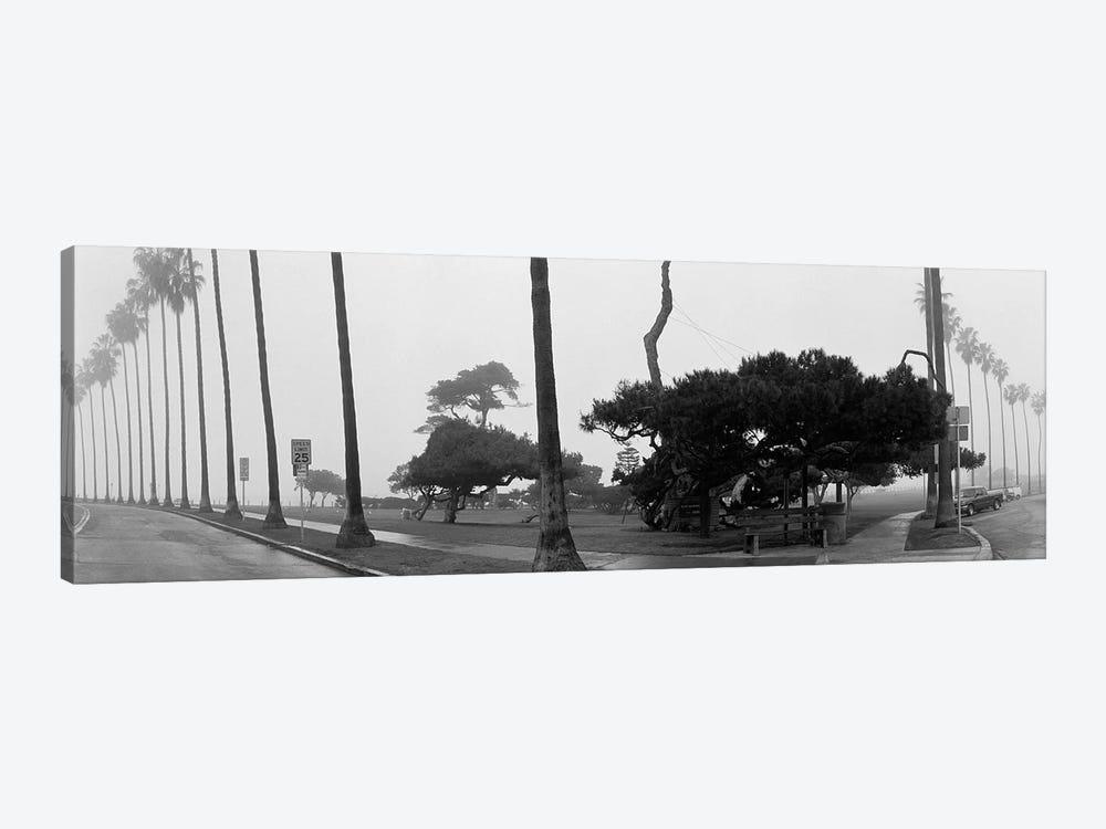 Palm Trees And Fog, San Diego, California by Panoramic Images 1-piece Canvas Artwork