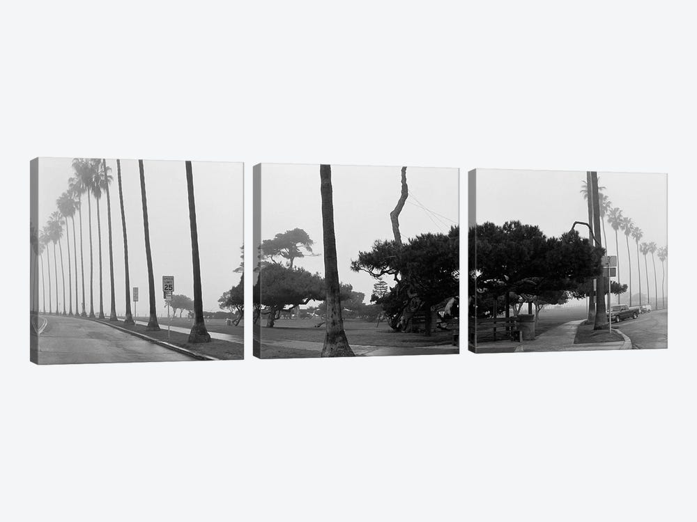 Palm Trees And Fog, San Diego, California by Panoramic Images 3-piece Canvas Art