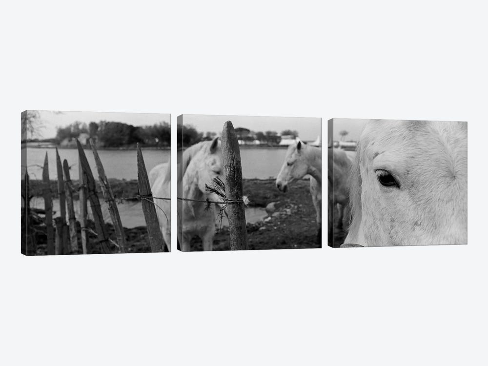 Horses, Camargue, France by Panoramic Images 3-piece Canvas Print