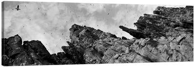 Birds Nesting In Cliffs, Norway Canvas Print #PIM3559