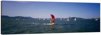 Sailboats in the water, San Francisco Bay, California, USA Canvas Print #PIM3564