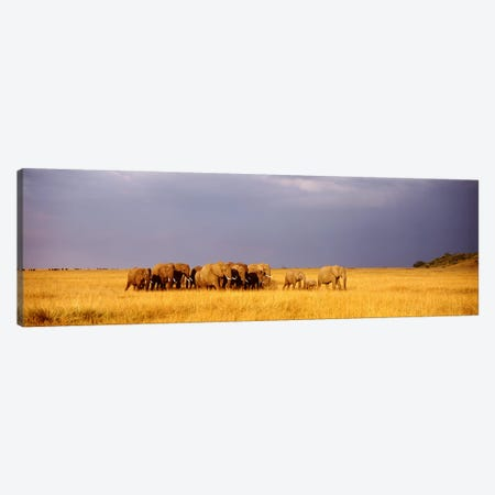 Elephant Herd, Maasai Mara Kenya Canvas Print #PIM3604} by Panoramic Images Art Print