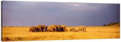 Elephant Herd, Maasai Mara Kenya Canvas Print #PIM3604