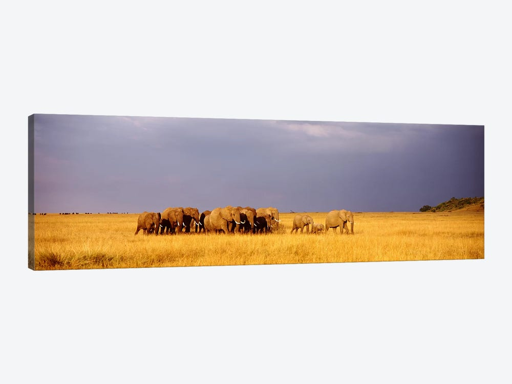 Elephant Herd, Maasai Mara Kenya by Panoramic Images 1-piece Canvas Wall Art
