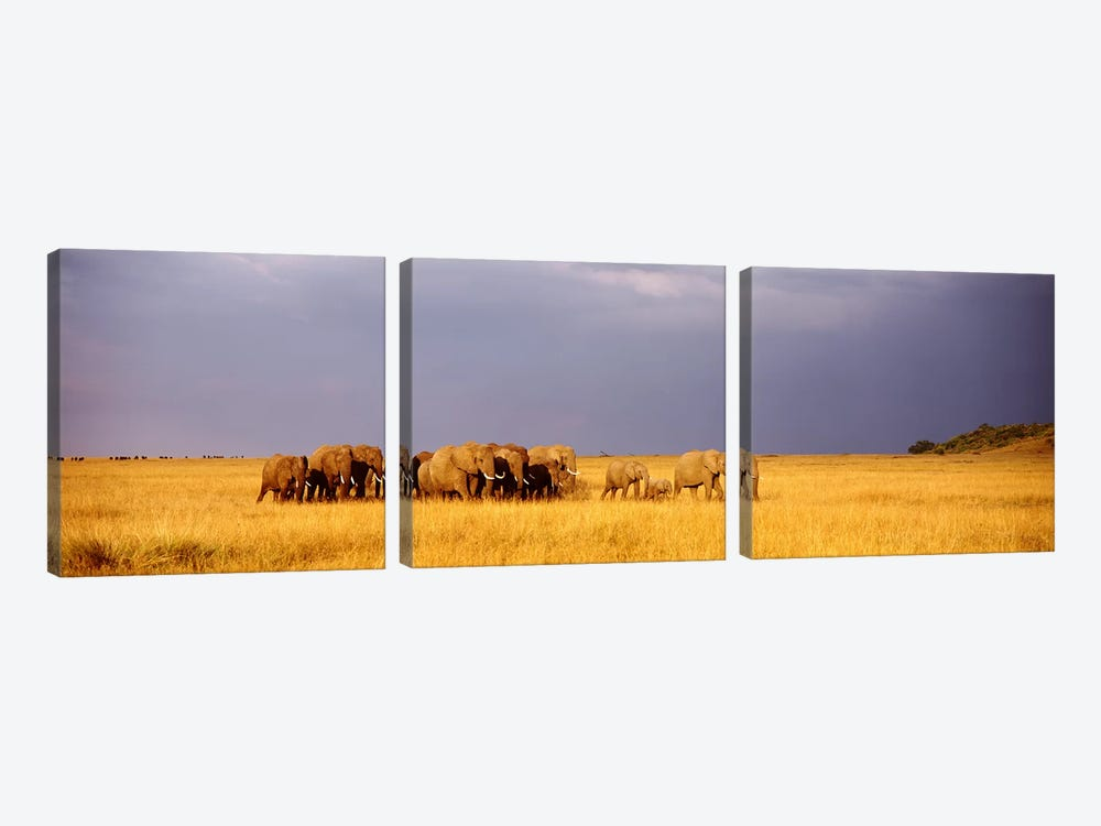 Elephant Herd, Maasai Mara Kenya by Panoramic Images 3-piece Canvas Art