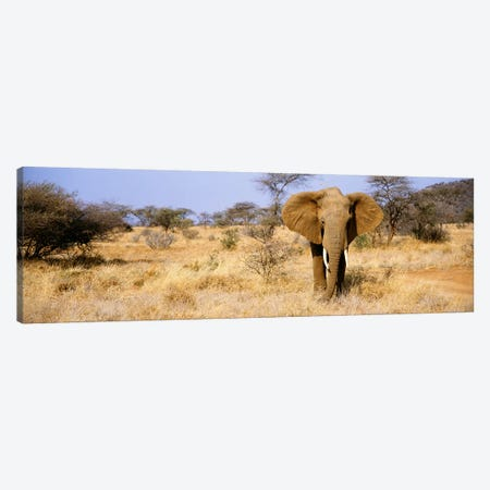 Lone Elephant, Samburu National Reserve, Kenya, Africa Canvas Print #PIM3605} by Panoramic Images Art Print