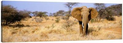 Lone Elephant, Samburu National Reserve, Kenya, Africa Canvas Print #PIM3605