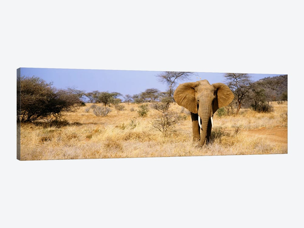 Lone Elephant, Samburu National Reserve, Kenya, Africa by Panoramic Images 1-piece Canvas Art Print