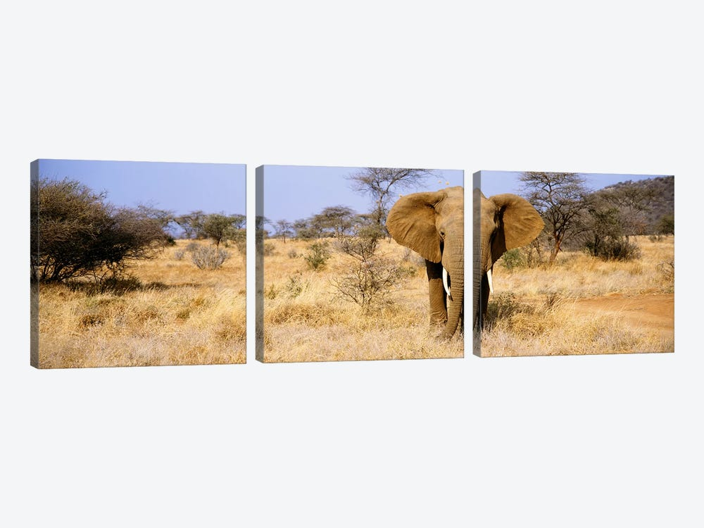 Lone Elephant, Samburu National Reserve, Kenya, Africa by Panoramic Images 3-piece Canvas Print