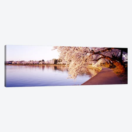 Tidal Basin, Washington DC, District Of Columbia, USA Canvas Print #PIM3681} by Panoramic Images Canvas Wall Art