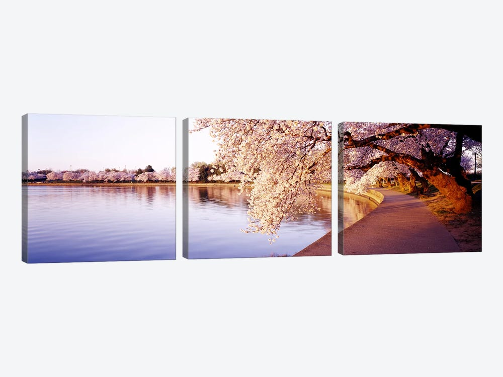 Tidal Basin, Washington DC, District Of Columbia, USA by Panoramic Images 3-piece Canvas Print
