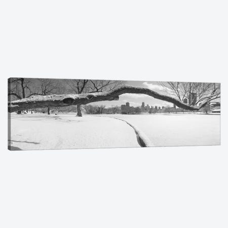 Bare trees in a park, Lincoln Park, Chicago, Illinois, USA Canvas Print #PIM3732} by Panoramic Images Canvas Wall Art