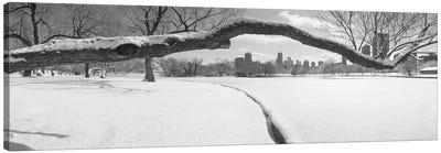 Bare trees in a park, Lincoln Park, Chicago, Illinois, USA Canvas Print #PIM3732