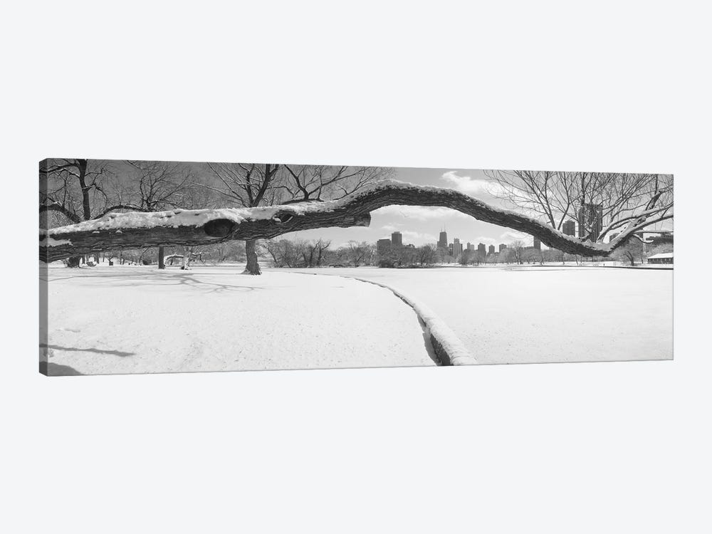 Bare trees in a park, Lincoln Park, Chicago, Illinois, USA by Panoramic Images 1-piece Canvas Artwork
