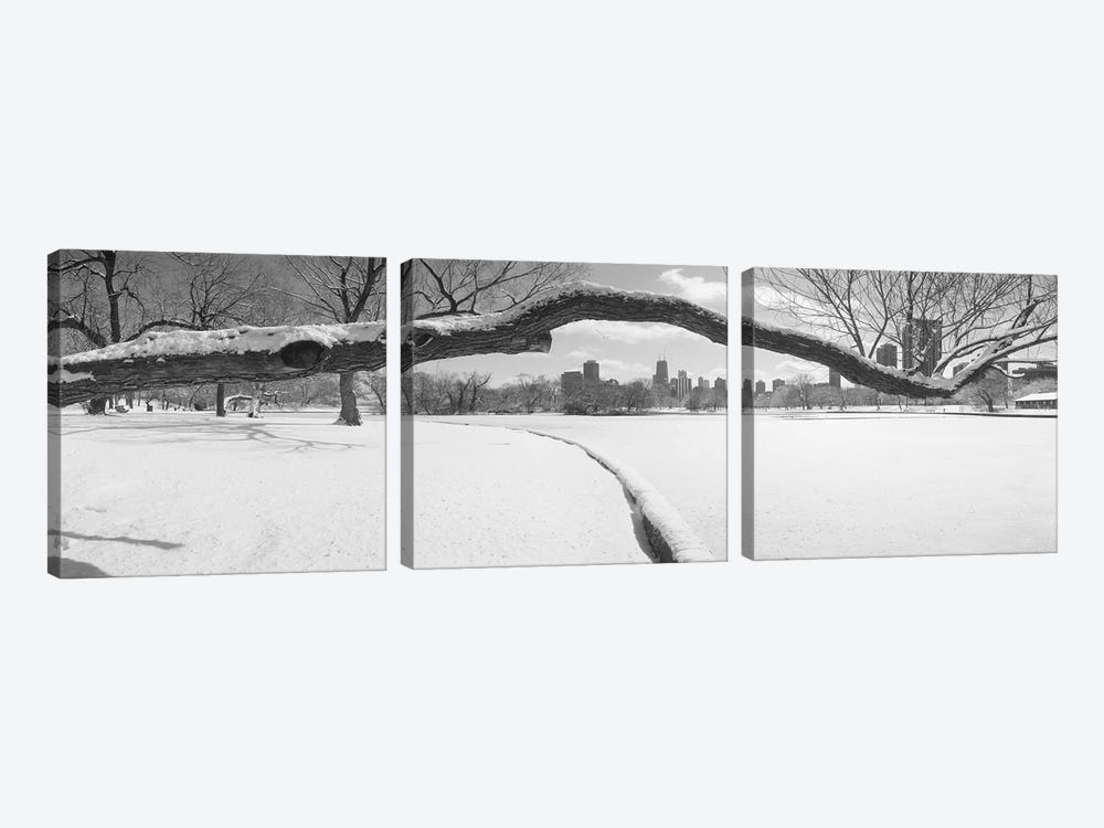 Bare trees in a park, Lincoln Park, Chicago, Illinois, USA by Panoramic Images 3-piece Canvas Artwork