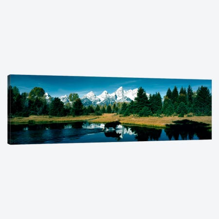 Moose & Beaver Pond Grand Teton National Park WY USA Canvas Print #PIM376} by Panoramic Images Art Print
