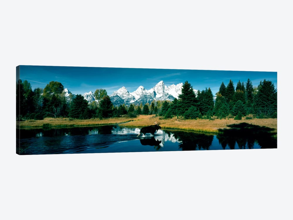 Moose & Beaver Pond Grand Teton National Park WY USA by Panoramic Images 1-piece Canvas Art Print