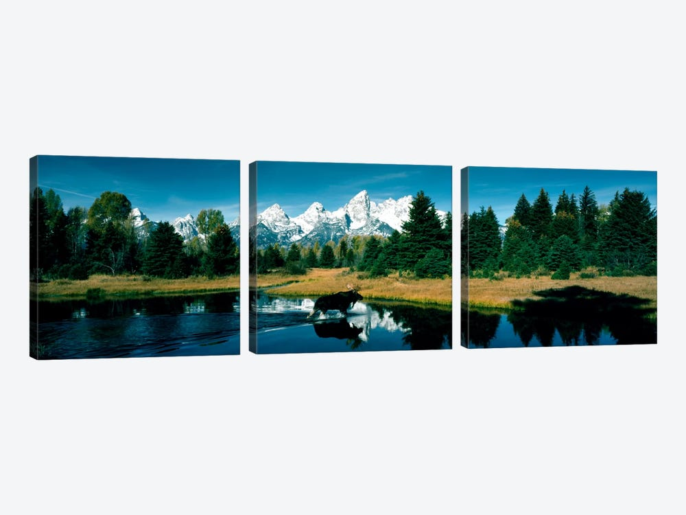 Moose & Beaver Pond Grand Teton National Park WY USA by Panoramic Images 3-piece Canvas Print
