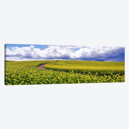 RoadCanola Field, Washington State, USA Canvas Print #PIM3782} by Panoramic Images Canvas Art Print