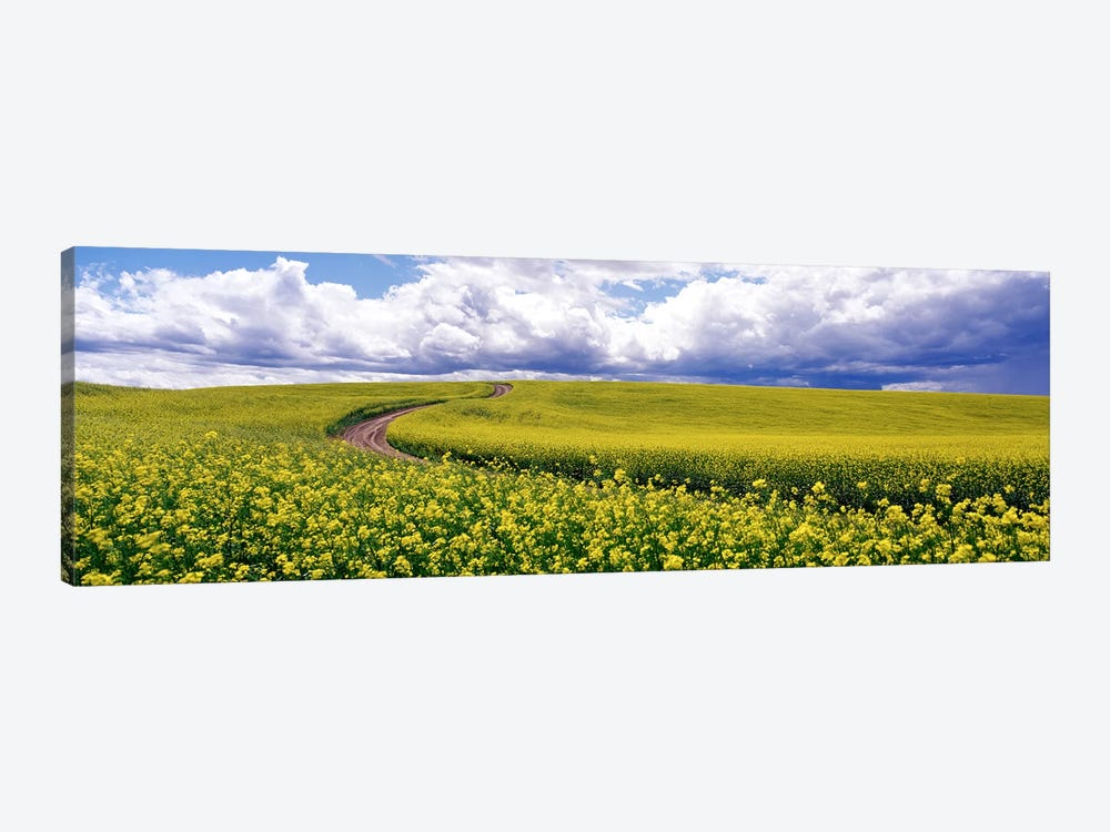 RoadCanola Field, Washington State, USA by Panoramic Images 1-piece Canvas Print