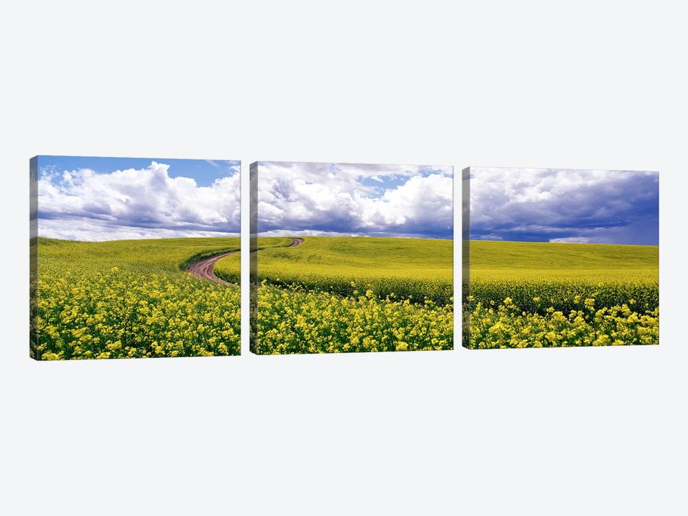 RoadCanola Field, Washington State, USA by Panoramic Images 3-piece Art Print