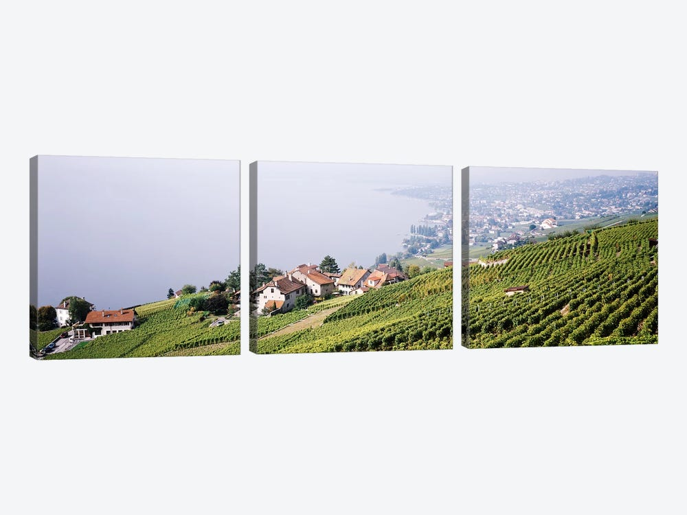 Hillside Sloping Vineyards, Lausanne, Vaud, Switzerland 3-piece Canvas Art Print
