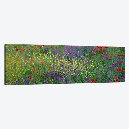 Wildflowers El Escorial Spain Canvas Print #PIM3891} by Panoramic Images Canvas Print