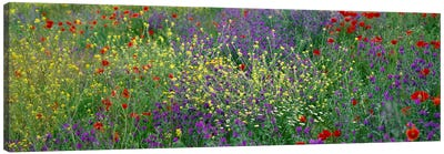 Wildflowers El Escorial Spain Canvas Art Print