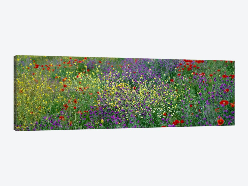 Wildflowers El Escorial Spain by Panoramic Images 1-piece Canvas Print