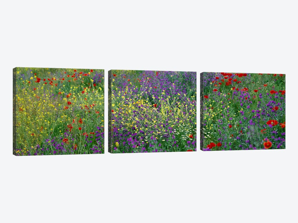 Wildflowers El Escorial Spain by Panoramic Images 3-piece Art Print