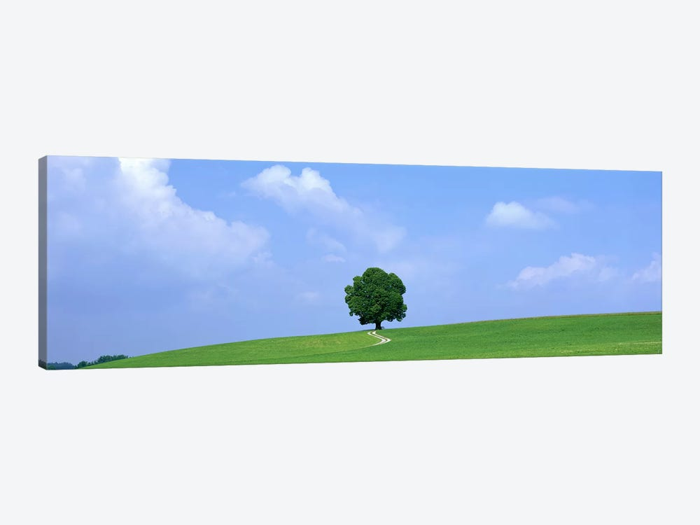 Lone Tree on Hilltop Salzkammergut Austria by Panoramic Images 1-piece Canvas Art