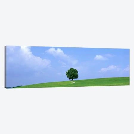 Lone Tree on Hilltop Salzkammergut Austria 3-Piece Canvas #PIM3892} by Panoramic Images Canvas Art Print