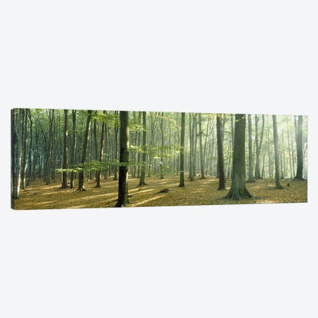 Woodlands near Annweiler Germany Canvas Print #PIM3893} by Panoramic Images Art Print