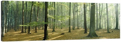 Woodlands near Annweiler Germany Canvas Art Print