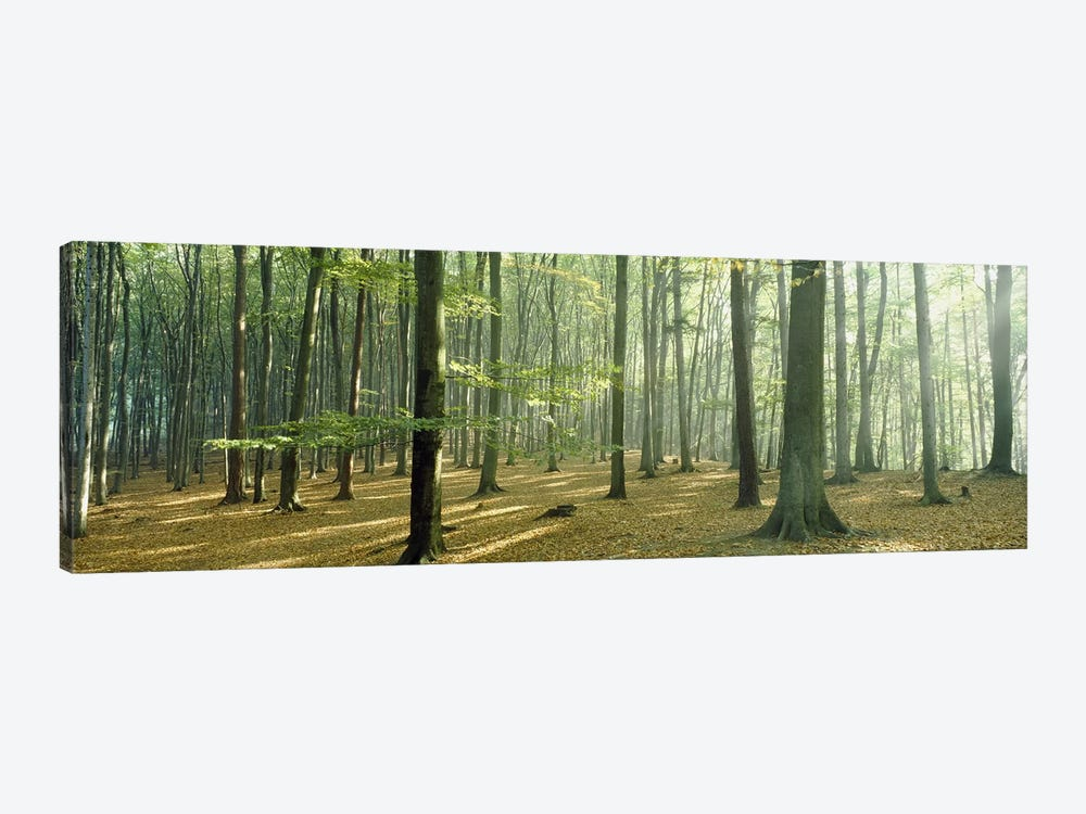 Woodlands near Annweiler Germany by Panoramic Images 1-piece Canvas Art Print